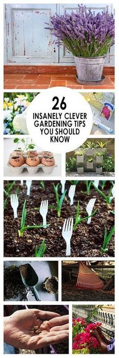 Gardening, home garden, garden hacks, garden tips and tricks, growing plants, gardening DIYs, gardening crafts, popular pin, backyard hacks, backyard tips and tricks, outdoor living, home and garden #homeandgarden #gardeningcrafts #gardeninghacks #outdoorsliving