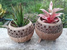 Medium Size Handicraft Coconut Shell Pot Planter Garden Candle Stand Holders Natural Color by Handmadebyyucrack on Etsy Planter Garden, Planter Ideas, Planter Pots, Coconut Shell Crafts, Garden Candles, Smoke Art, Concrete Planters, Candle Stand, Air Plants