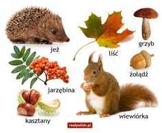 Autumn Crafts, Autumn Art, Learn Polish, Polish Language, Autumn Activities For Kids, Primary Teaching, World Languages, Speech And Language, Logo Nasa