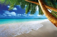 Beach with palms at the sea - photo wallpaper - paradise beach with palms wall ornament - XXL beach wall decoration www.great-art.de http://www.amazon.com/dp/B00GA22VOK/ref=cm_sw_r_pi_dp_FNL5tb0RV572B