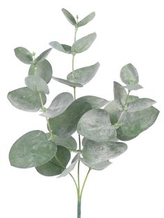 Frunze si crengi artificiale Crenguta de Eucalipt 28 cm verde