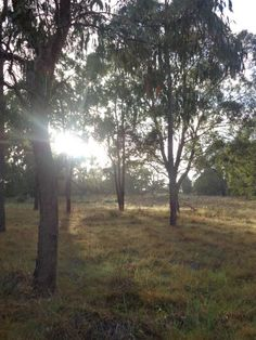 Rising Sun in Tenterfield Park.