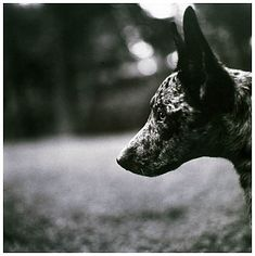 keith carter dogs - Google Search