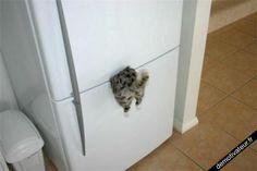 Magnet chat pour frigo