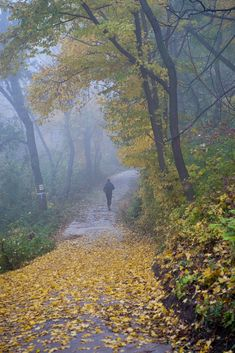 Destinations, Autumn Morning, Winding Road, Pathways, Beautiful Images, Mists, Nature, Scenery, Country Roads