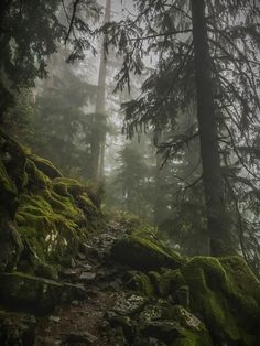 mossy slope   nature photography