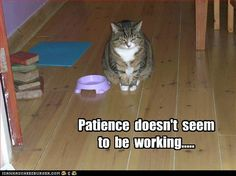 Patience doesn't seem to be working...