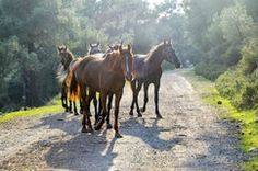 Atlar, Büyükada Royalty Free Hazır Fotoğraflar Free sınıf Atlar