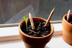 Sprout Is A Pencil That Turns Into A Plant