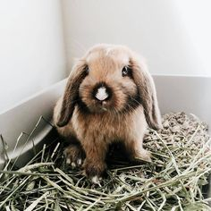 The Online Rabbit Store, Supplies, Gifts, Lovers! Guinea Pig Toys, Guinea Pig Care, House Rabbit, Pet Rabbit, Animals And Pets, Baby Animals, Cute Animals, Rabbit Eating, Bunny Care