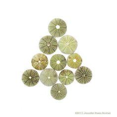 """Sea Urchin Christmas Tree"" by Jennifer Booher"