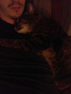 Despite popular opinion cats are full of love