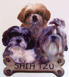 Puppies with Bone Biscuit Shih Tzu Dog WOMANS T Shirt 10981