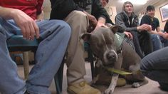 Stevie the Wonder Dog, and his unique brand of therapy is helping dozens of men and women cope with their addictions.