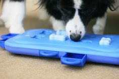 Full review of the Nina Ottosson Dog Toys range - dog tornado, mix max puzzle, dog treat maze and dog casino. Find the best toy for your dog.