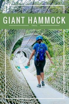 Giant hammock masungi georeserve travel philippines asia southeast asia trek trail hiking  Philippines Places to Visit  सूचना के लिए हमारी साइट पर पहुंचें   https://storelatina.com/philippines/travelling #Filipi #vacation #ফিলিপাইন #Filipinetan