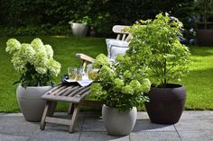 Hardy woody plants for container planting - Innen Garten - Eng Potted Plants Patio, Landscaping Plants, Planting Plants, Diy Garden Projects, Diy Garden Decor, Container Plants, Container Gardening, Diy Jardin, Pot Plante