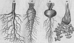 some roots. Cooking w/Root Vegetables. ... seems scary, but it's just fear of the knife. Once you are fearless there, know how to make something SAFE not slippery -- you can Manage the toughest Rutabaga and say --- HEY!!!   Man that was GOOD!