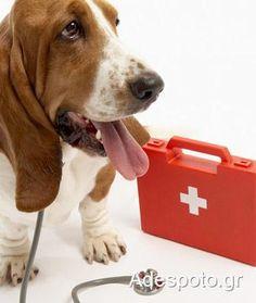 Το κουτί πρώτων βοηθειών για το ζώο μας