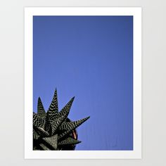 Collect your choice of gallery quality Giclée, or fine art prints custom trimmed by hand in a variety of sizes with a white border for framing. Aloe, Fine Art Prints, In This Moment, Make It Yourself, Fresh, Gallery, Roof Rack, Art Prints, Aloe Vera