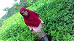 Hijaunya Indonesia ku..