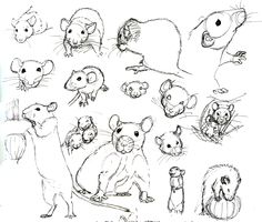 Hoe teken je een rat.