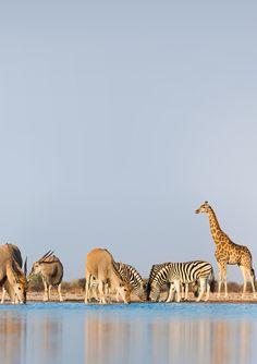 Brothers #animals #nature