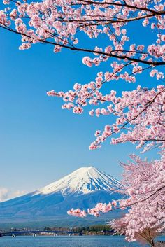 When To See Japan& Cherry Blossom Trees in Full Bloom Cherry Blossom Tree, Blossom Trees, Bloom Blossom, Landscape Photography, Nature Photography, Japan Travel Photography, Photography Tips, Portrait Photography, Wedding Photography