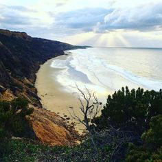 A morning well spent  got my peppermint tea live guitar in the background and camera at the ready for #baewatch ! #Australia #gor #victoria #greatoceanroad #baewatch #surfers #stunning #beach #cliffs #shakkas #surfbeach #swellcheck #wandervictoria #wakeup #sunrise #picoftheday #photography @australia by katbirchley