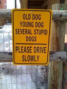 Paw Print City Times: Dog Signs