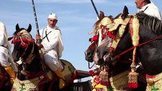 Morocco In Motion - La Tbourida (Fantasia) au Maroc on Vimeo