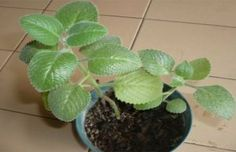 ¡Haz que tus plantas luzca siempre verde y frondosa con este truco!