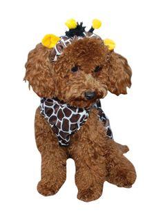 Giraffe Dog Costume... MUST MAKE THIS!!!!