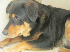 www.PetHarbor.com pet:SANT.A389017