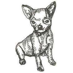 Chihuahua Drawing