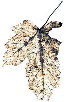 laceandflora: Mike & Doug Starn.