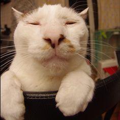 おはヨウカンさん!Good Morning Yohkan-san! #cats #neko #yohkan #ねこ部 #uchinonekora - @kachimo- #webstagram