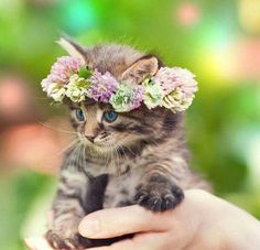 Let see pictures of cat bath/wet cat, Cats are cute and cuddly animals. The independent nature of cats makes them an ideal choice as pets. Cute Kittens, Puppies And Kitties, Dogs, Kittens Cutest Baby, Fluffy Kittens, Pretty Cats, Beautiful Cats, Animals Beautiful, Pretty Kitty