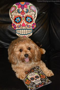 A Day of the Dead Tongue Out Tuesday - YourDesignerDog
