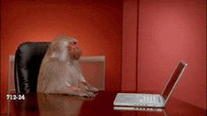 #monkey #angry #computer #work #laptop