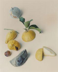 harley weir fruit - Google Search