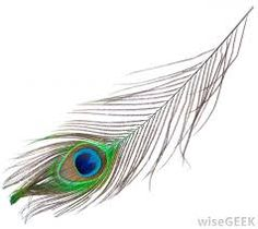 Peafowl are large birds that are best known for the bright feathers of the males. Peacock Wall Art, Peacock Feather Tattoo, Feather Drawing, Feather Tattoo Design, Owl Tattoo Design, Feather Art, Feather Tattoos, Nature Tattoos, Peacock Feathers