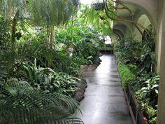 Inside Cunningham House, Botanic Gardens. Miss this lovely place :(
