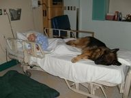 Progressive hospital allows visits from patients' own pets. Service dogs are usually allowed.