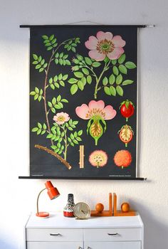 Vintage botanical school pull down chart map by MightyVintage