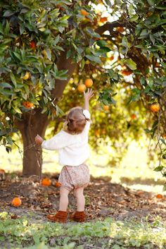 If this is an orange tree, then in an orange grove! Fall Pictures, Fall Photos, Fall Pics, Children Photography, Family Photography, Apple Orchard Photography, Autumn Photography, Portrait Photography, Little People