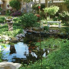 Beautiful Koi pond with water lillies!  #koi #pond #waterfeature