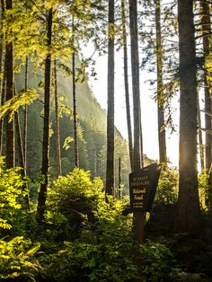 Sunny Snoqualmie Forest