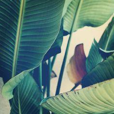 palm tree like a rockstar #palm #tree #jungle #palms