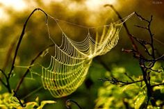 ~♥~ Life is a web of endless possibilities ~♥~